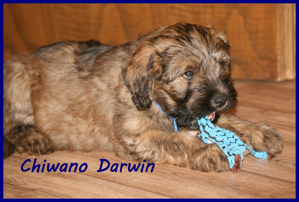 Chiwano with 8 weeks