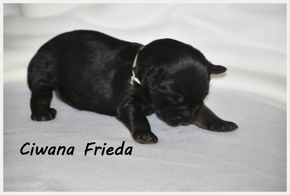 Ciwana with 2 weeks