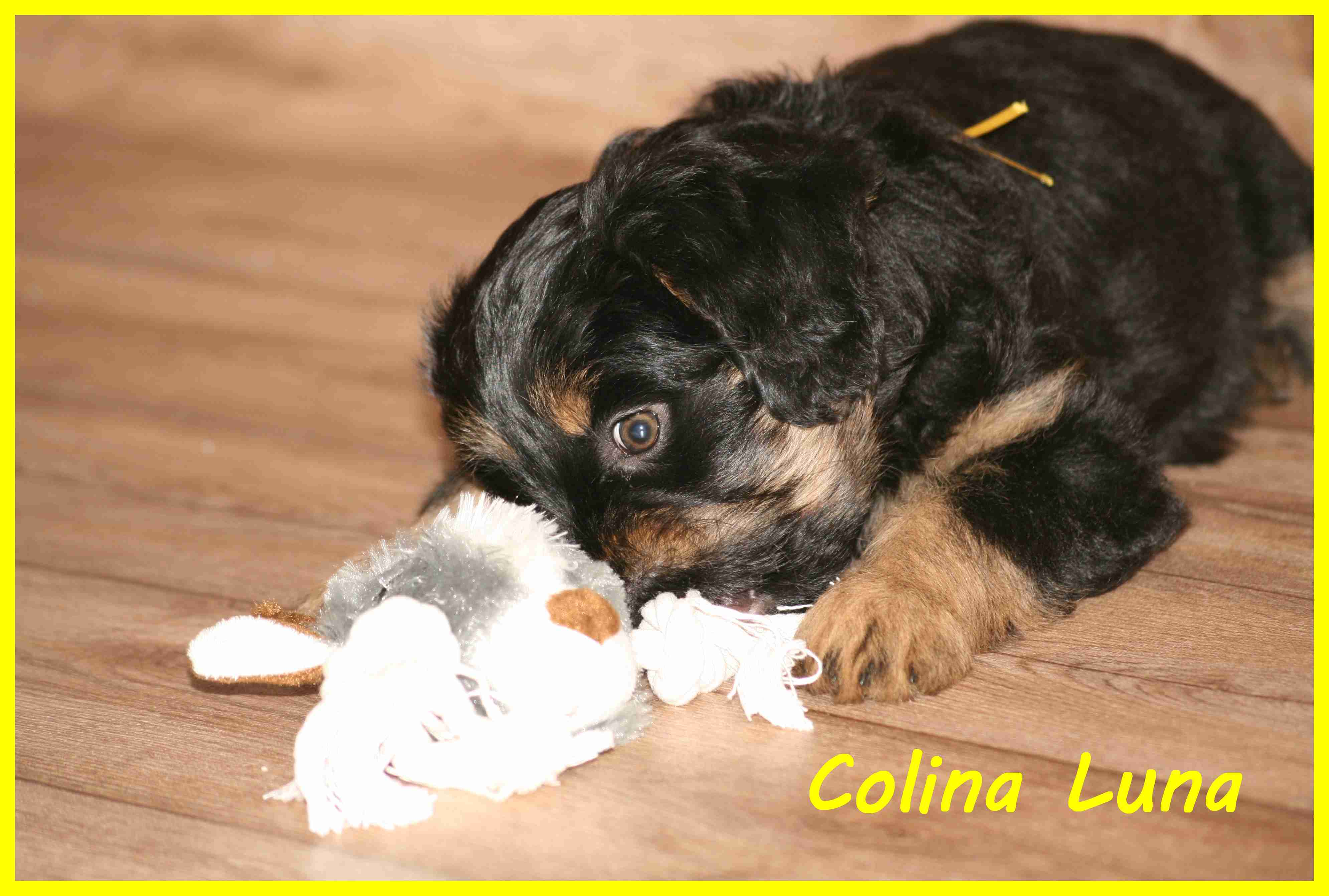 Colina with 8 weeks