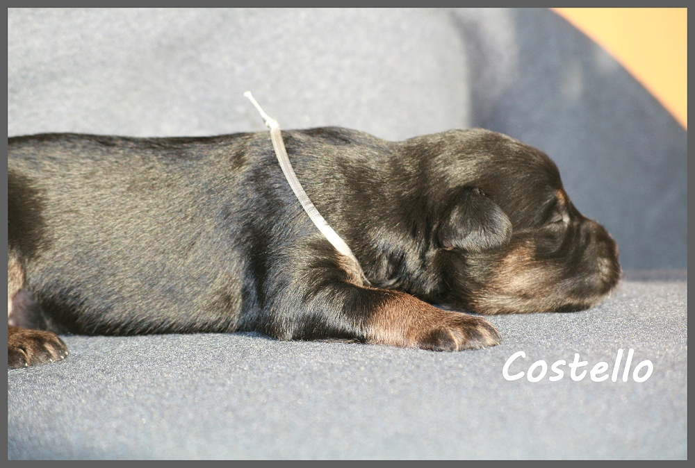 Costello with 2 weeks