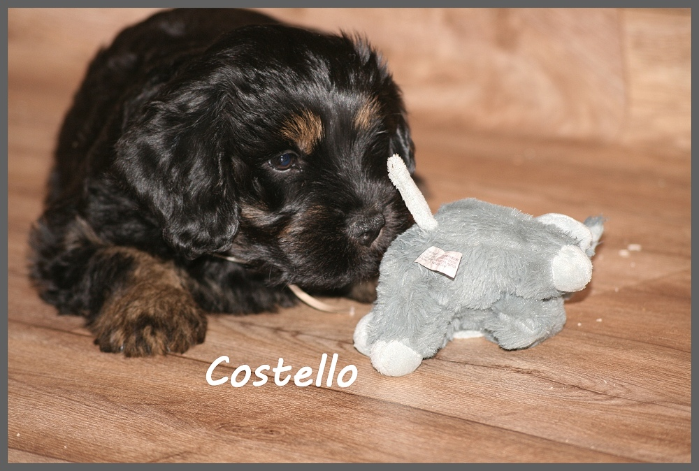 Costello with 8 weeks