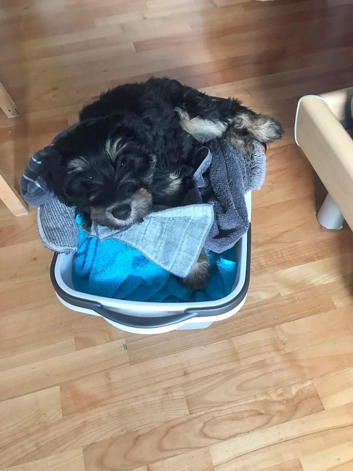 Cuni hilft mit der Wäsche