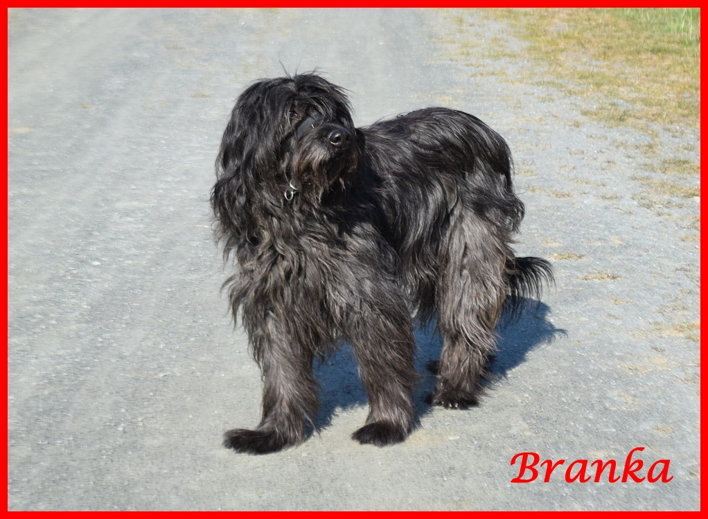 Branka 10 Years