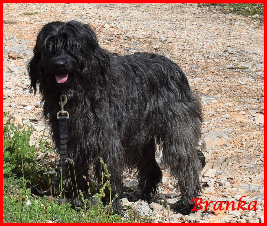 Branka 9 years