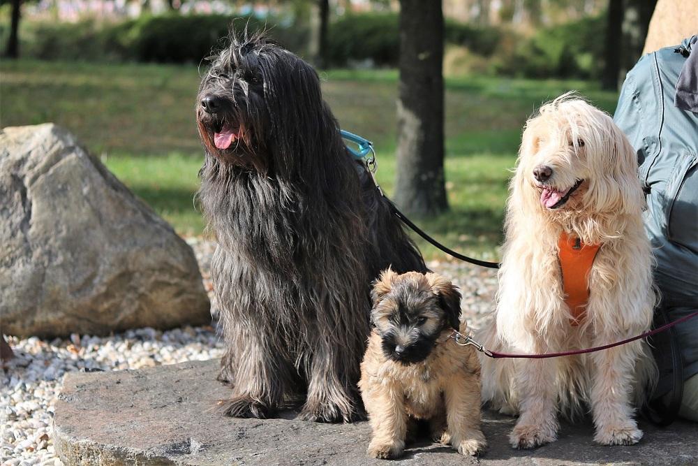 Biego mit Baby Jara und Chika