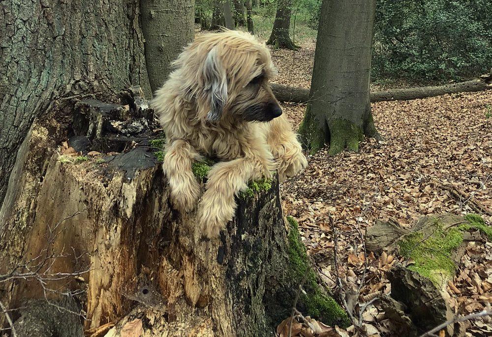 Bomo-Tiesto im Wald