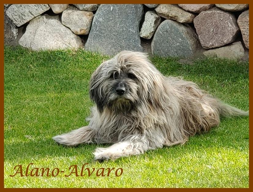 Alano 12 Jahre