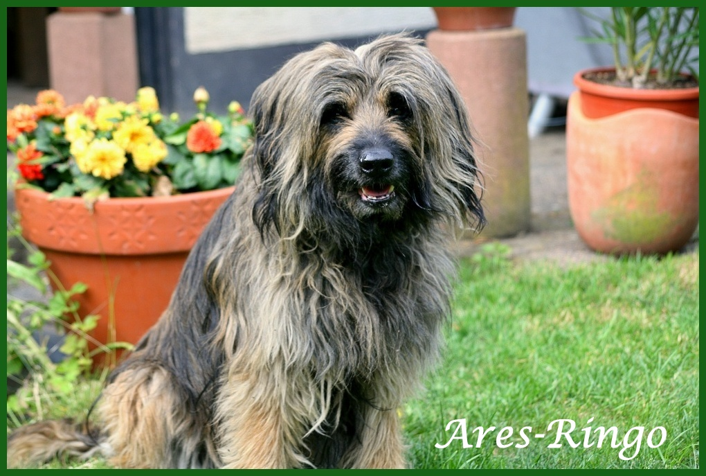 Ares 12 Jahre