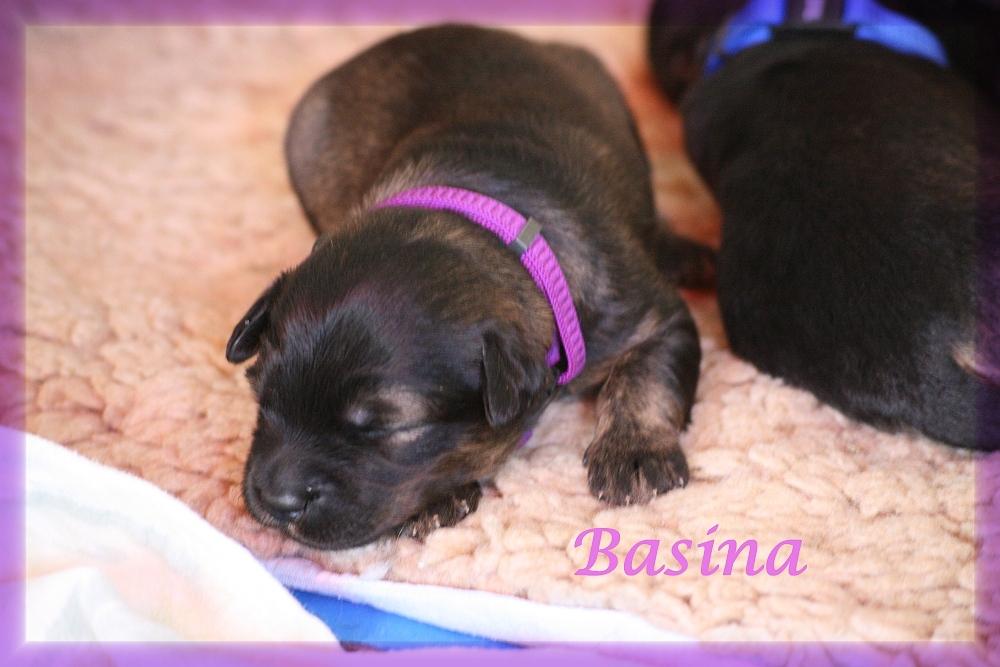 Basina