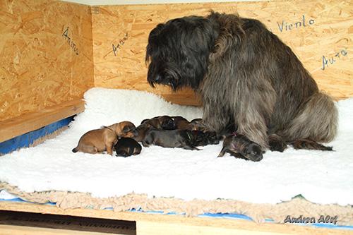 Benga fürsorgliche Mutter
