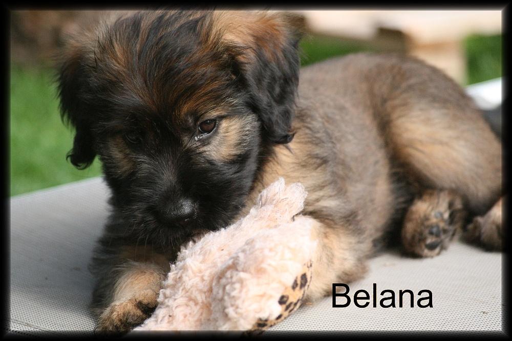 Belana