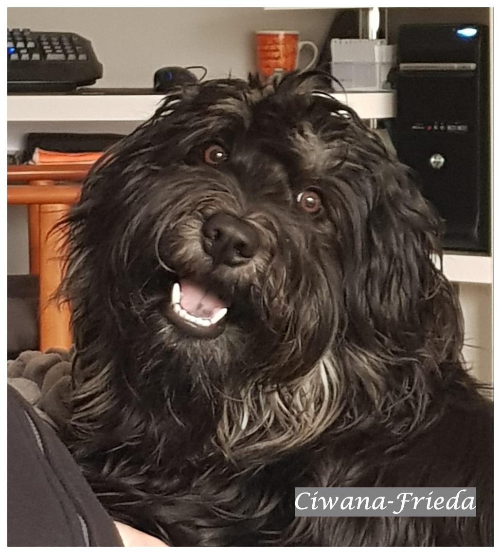 Ciwana 1 year