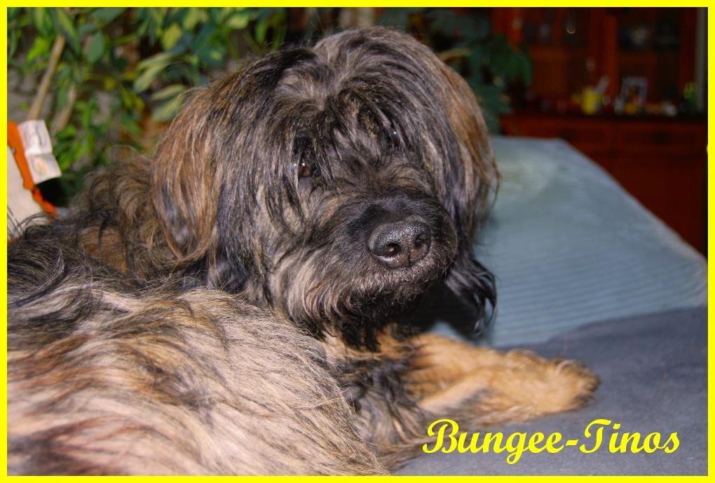 Bungee 11 Years